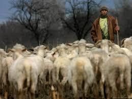 Shepherds lead