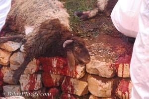 Slain Lamb