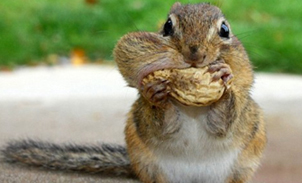 Gluttony1
